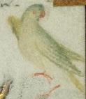folio 50r crop